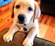 Пожалуйста дайте щенка в хорошие руки... уже давно о ней мечтаю